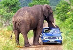 Paket Wisata Bromo Taman Safari Park Prigen