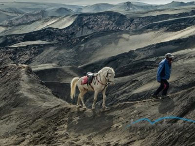 Harga Sewa Kuda di Bromo