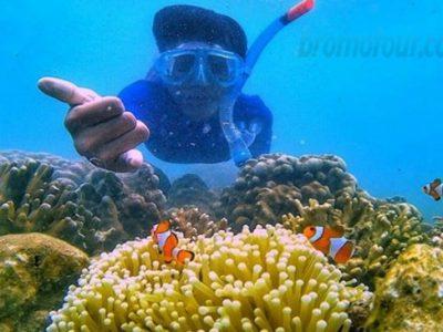 Harga Paket Snorkeling di Pulau Gili Ketapang