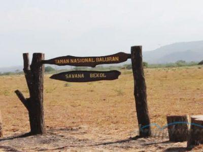 Indahnya Savana Bekol di Taman Nasional Baluran