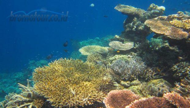 Wisata Snorkeling di Pantai Bama Baluran